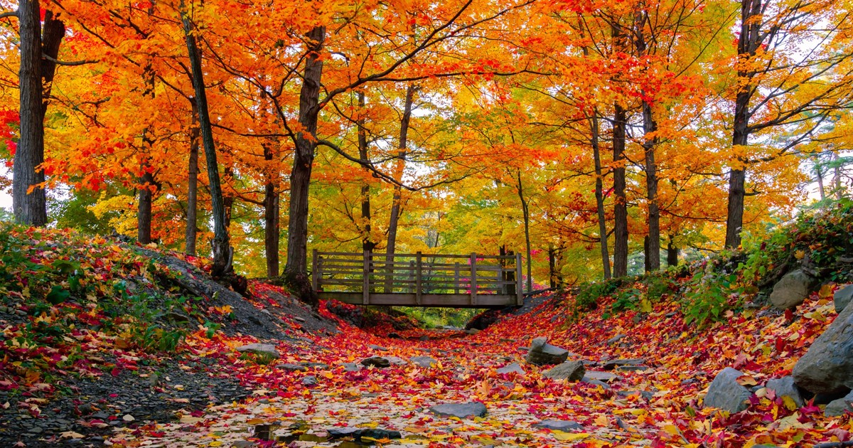 Fall Foliage in Greater Portland, Maine   Inn By The Sea, Maine